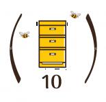category10